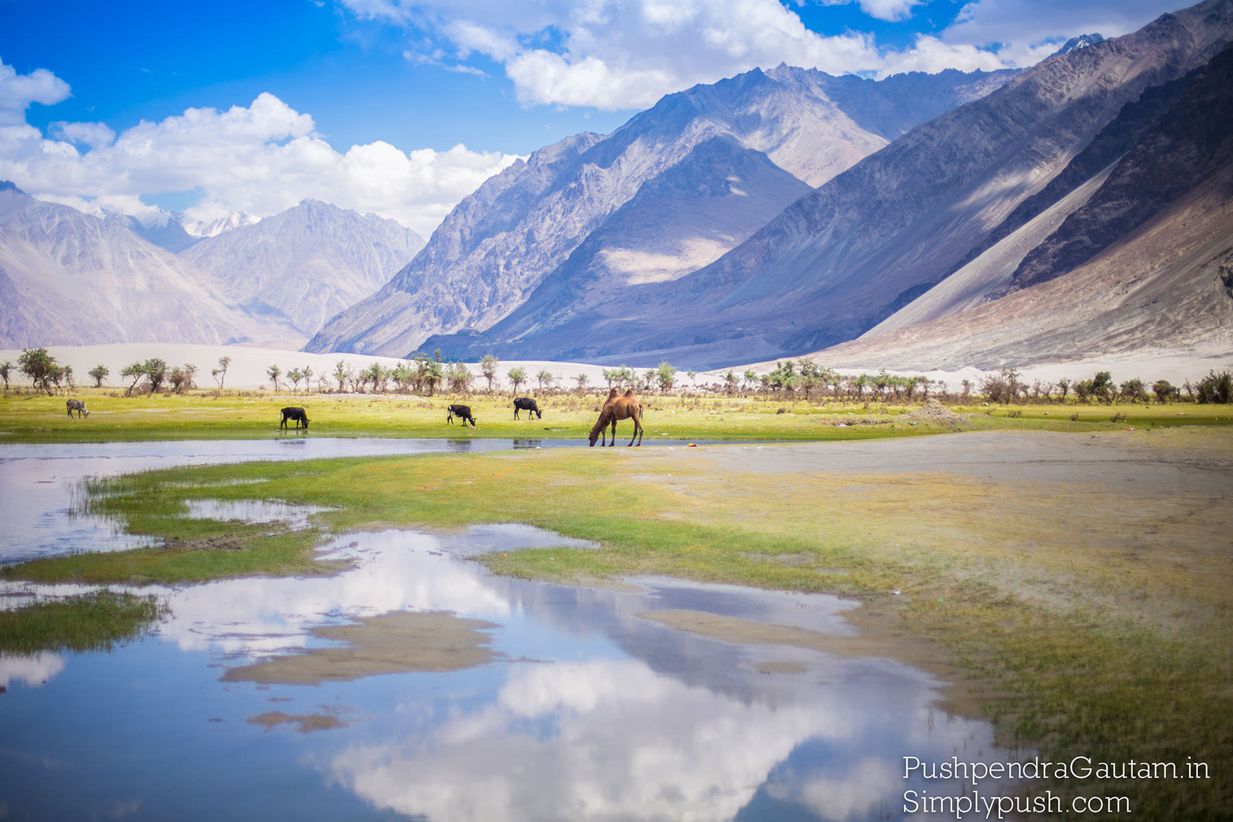 mountains-nubra-valley-pics-best-travel-photographer-india-pushpendragautam-pics-event-photographer-india