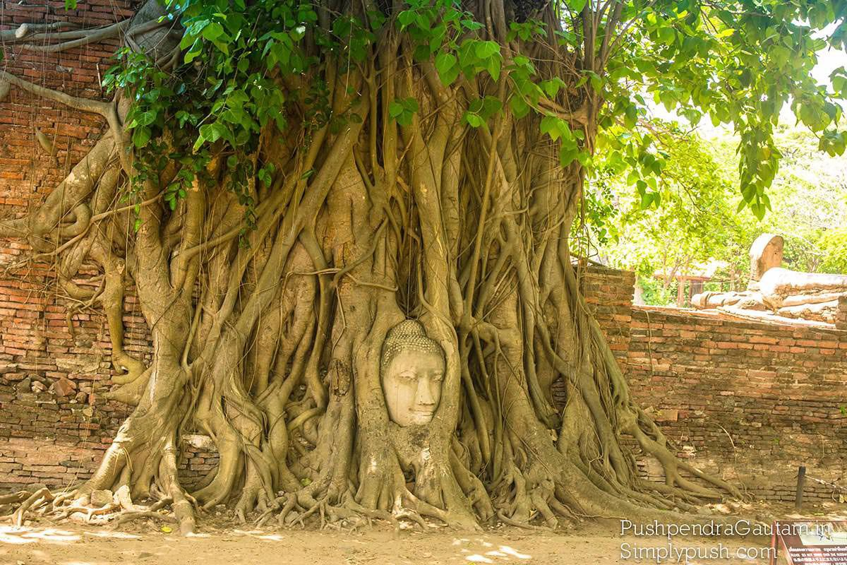 buddha-head-in-tree-root-pics-blog
